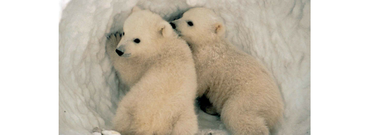 Say no to drilling in the Arctic